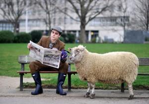 farmville-sheep_1860196i
