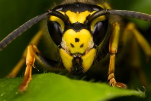 queen_wasp_ii_by_dalantech